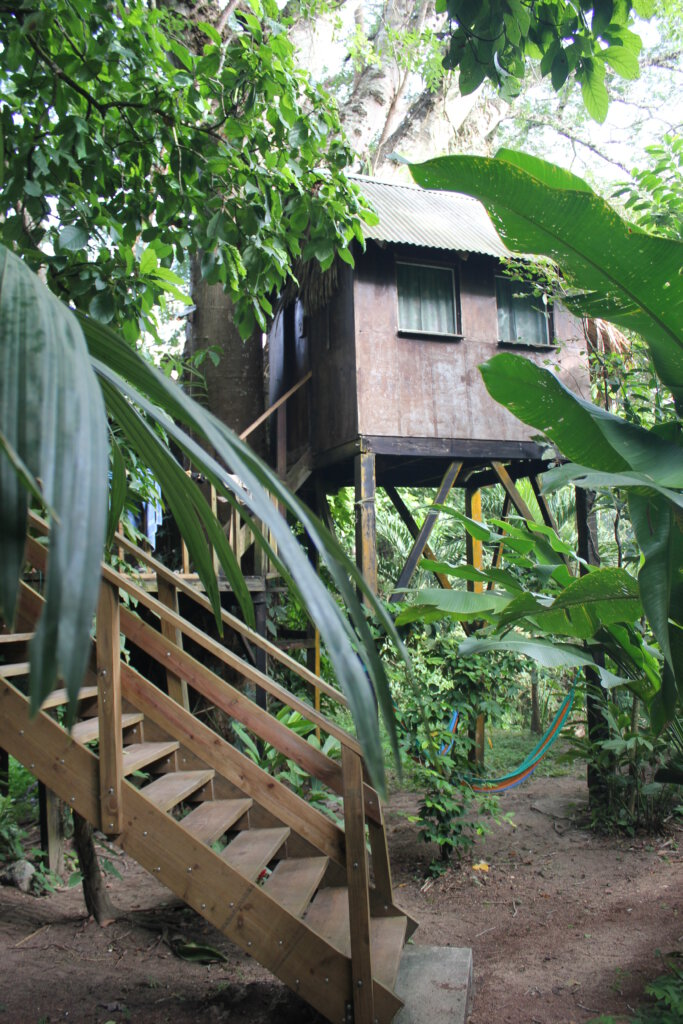 Treehouse van Parrot Nest Lodge in San Ignacio Belize