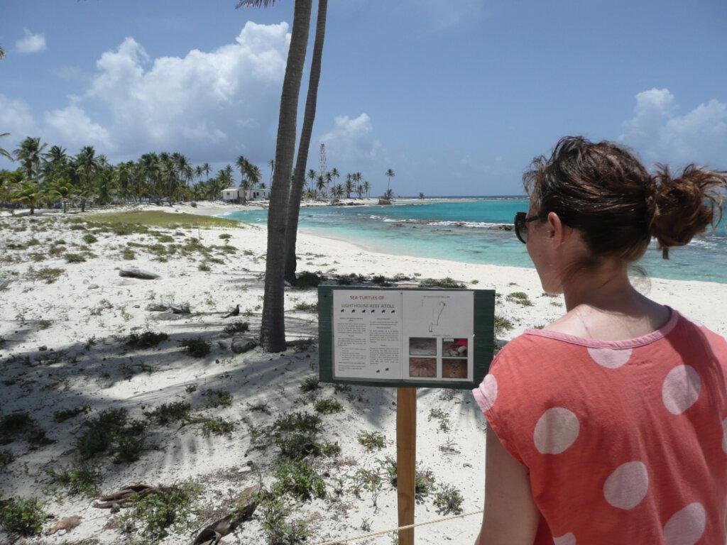 Schildpadnesten op Half Moon Caye in Belize