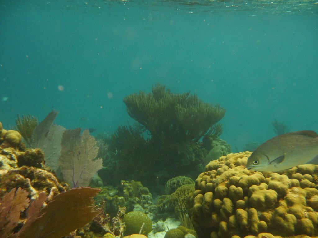 Snorkelen tussen het koraal in Belize