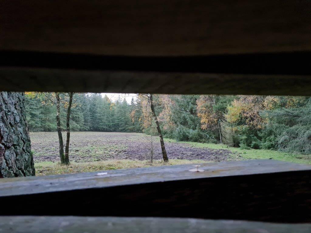 Op een paar minuten rijden van het tiny house kun je wild spotten