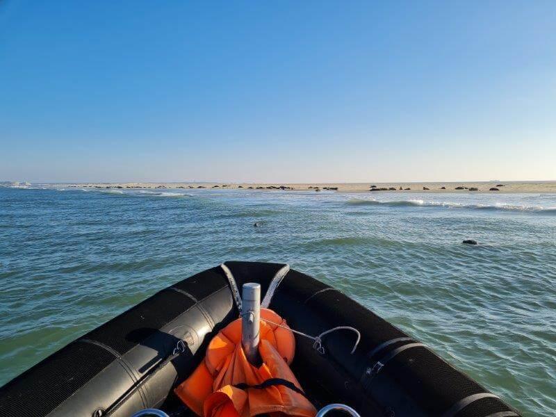 Eén van de 5 activiteiten op Waddeneiland Vlieland: Vlieland Robbentocht