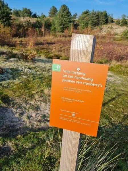 Activiteit op Waddeneiland Vlieland: gratis cranberry's plukken