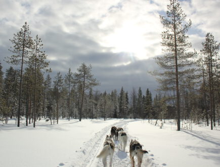 Huskysafari wintersport Finland