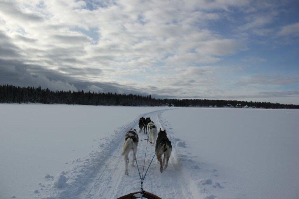 Huskysafari over een bevroren meer in Fins Lapland