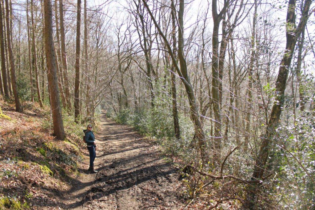 Weekend wandelen in Limburg door het Vijlenerbos