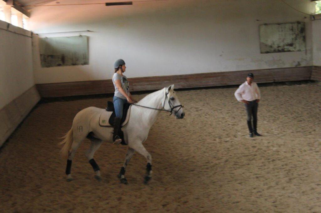 In Portugal kun je tijdens je reis paardrijden op Lusitano's