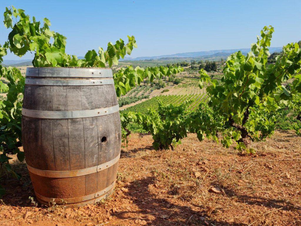 Een bezoek aan de bijzondere wijngaarden van Acustic Cellar Montsant tijdens een vakantie in Spanje