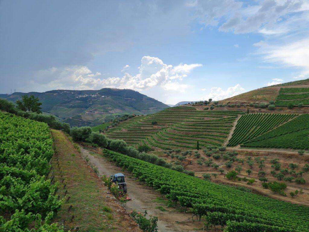 Eeuwenoude wijngaarden bij de Alto Douro